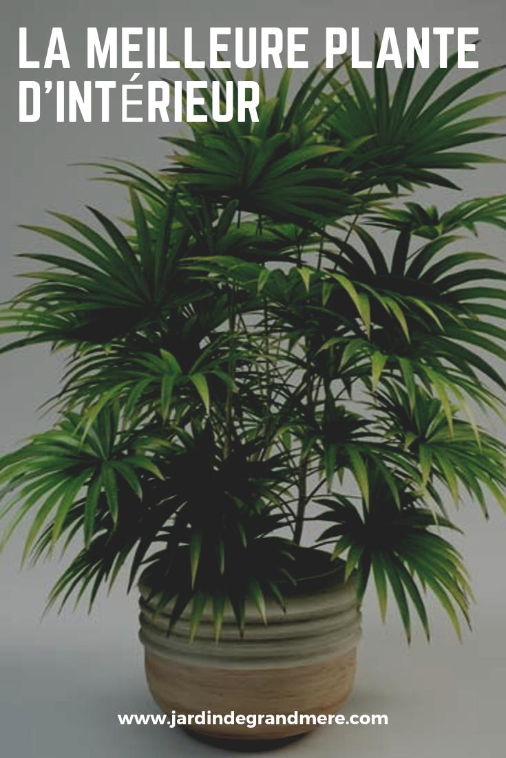 Faire Pousser Du Persil En Appartement Épinglé sur plantes