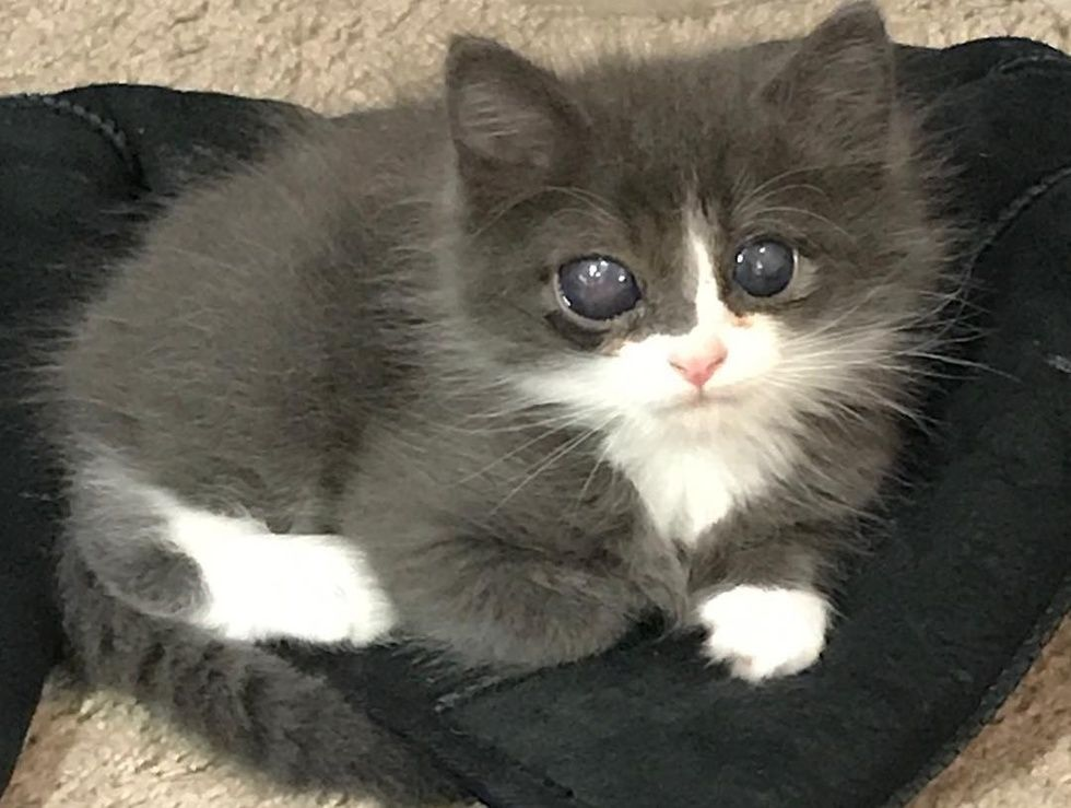 Woman Gave Special Kitten A Home When No One Else Did And Turned His Life Around Kittens Westminster Dog Show One Eyed Cat