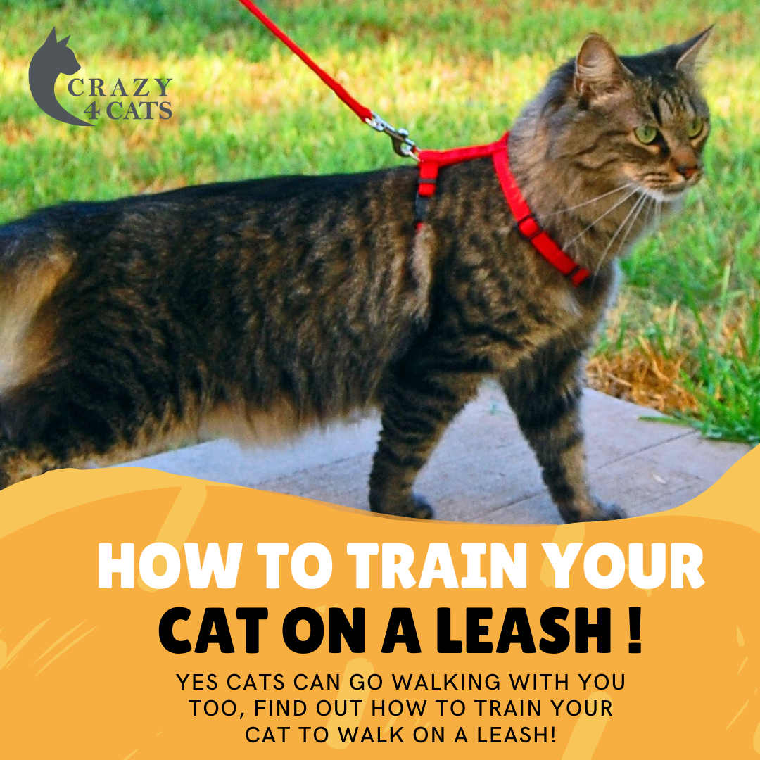 How To Train Your Cat On A Leash In 2020 Cat Leash Cat Harness Cats