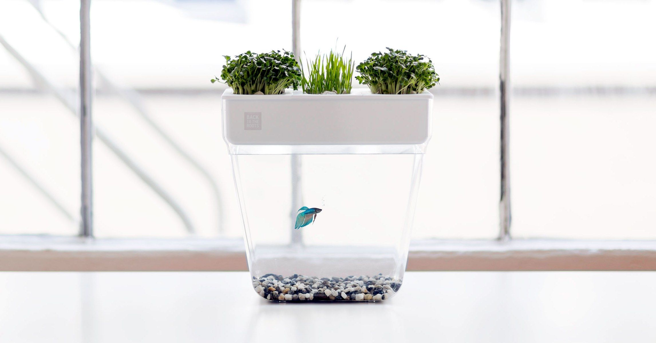 This Stress Free Fish Tank Lets Plants Do the Cleaning