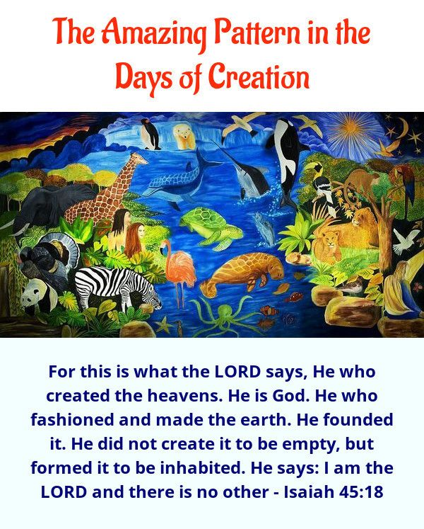 Seven Days of Creation | Days of creation, Bible creation ...