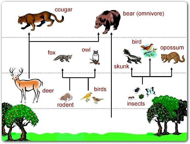 Food Chain Of Pond Life Google Search Rainforest Animals