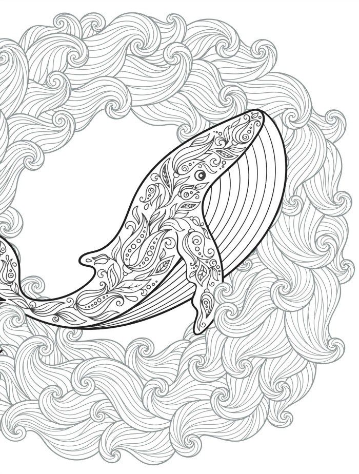 Whale Adult Coloring Page For Free Printing Coloring Pages Adult