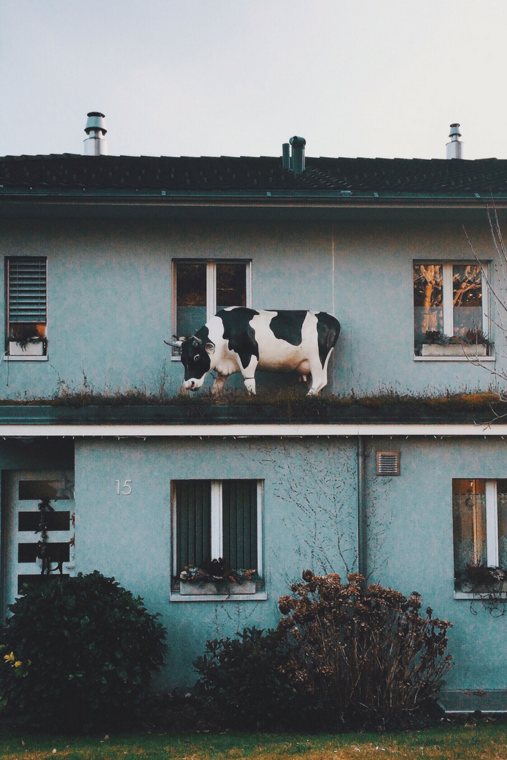 Only In Switzerland Would There Be A Cow Statue On Someone S Roof