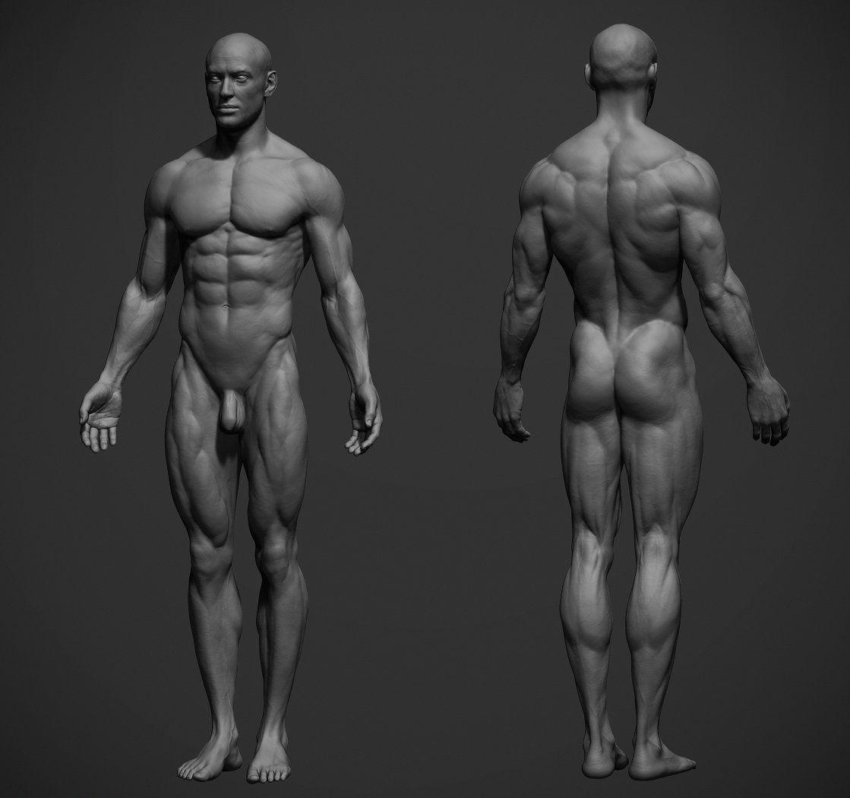 ArtStation - Male Anatomy Ref, adam skutt | Anatomy | Pinterest ...