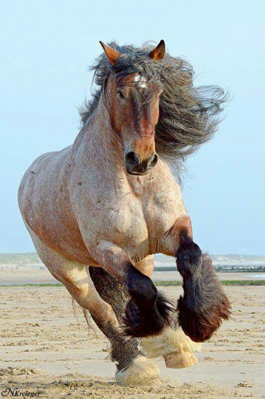 Draft Horse Named Django Photo By N Kreleger Horses Scary
