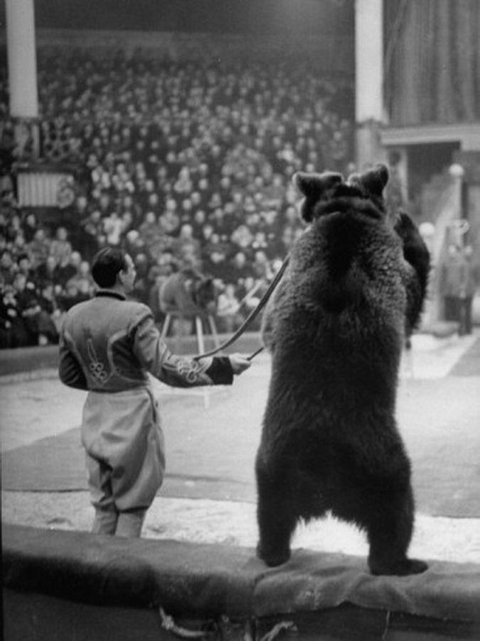 Dancing bear women-9980
