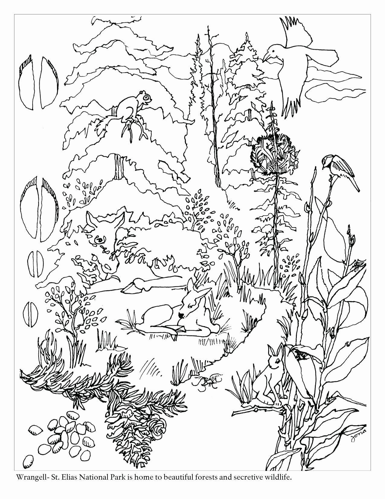 Coloring Sheets Jungle Animals Inspirational Rainforest Animals Coloring Sheets Whol Forest Coloring Pages Animal Coloring Pages Coloring Pictures Of Animals