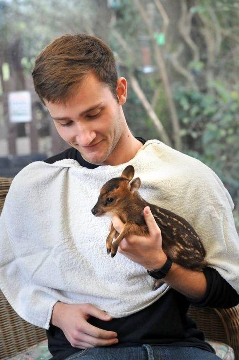 Baby Muntjac Deer : muntjac, Resource, Found, Animals,, Animal, Videos
