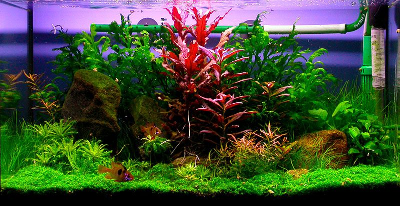 Plants For Fish Tanks Fake Or Live Fresh Water Fish Tank Artificial Aquarium Plants Aquarium Fish