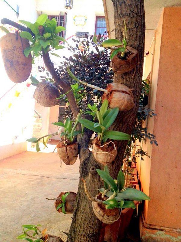 Garden Tour: Sanjana's Beautiful Green Paradise