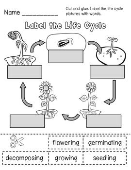 Plant Investigation Unit All About Plants Life Cycle And Needs Plant Life Cycle Plant Science Life Cycles