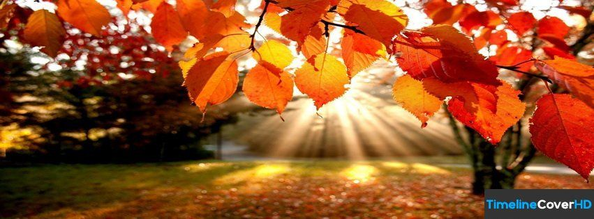 Autumn Leaves Trees The Rays Nature Timeline Cover 850x315 Facebook Covers