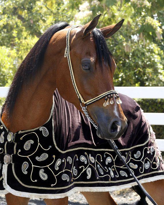 это наряды для лошадей в картинках планирует подраться