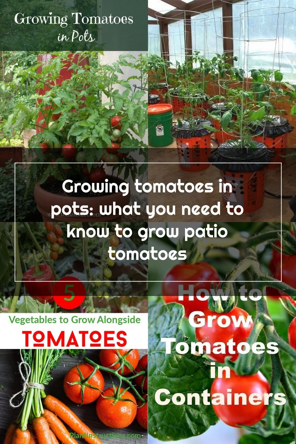 Growing Tomatoes In Pots The Basics About Container Tomatoes With Tomato Dirt Growingtomatoes In 2020 Growing Vegetables Patio Tomatoes Growing Tomatoes