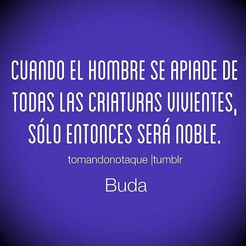 Frases Frases De Buda Frases De Ser Humano Buda Buda