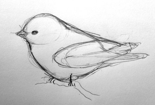 Easy D Line Drawings : Bird drawing crafts pinterest drawings and sketches
