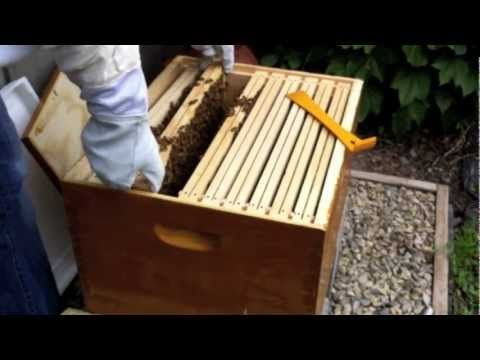 Backyard Beekeeper Part 2: Hive Inspection
