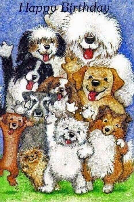 Birthday With Dogs Happy Birthday Dog Happy Birthday Animals Happy Birthday Fun