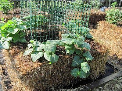 Straw Bale Gardening Faire Un Potager Bottes De Paille Lit De