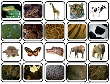 39 animal body coverings 39 match sort for autism zoo teaching unit autism animal coverings. Black Bedroom Furniture Sets. Home Design Ideas