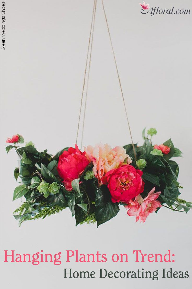 Hanging Plants on Trend : Home Decorating Ideas | Home Decor ...