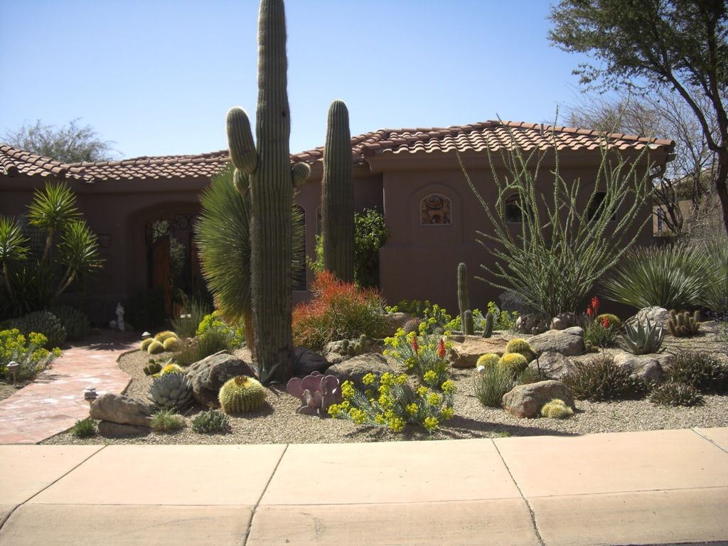 saguaros ocotillo barrel desert