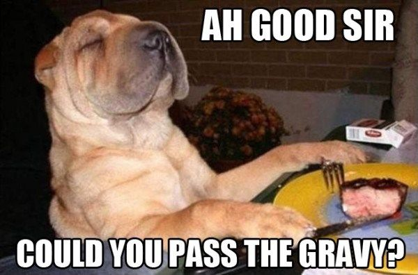 Gobble Up Some Of Our Favorite Thanksgiving Animal Memes Funny Thanksgiving Memes Funny Dog Memes Dog Memes