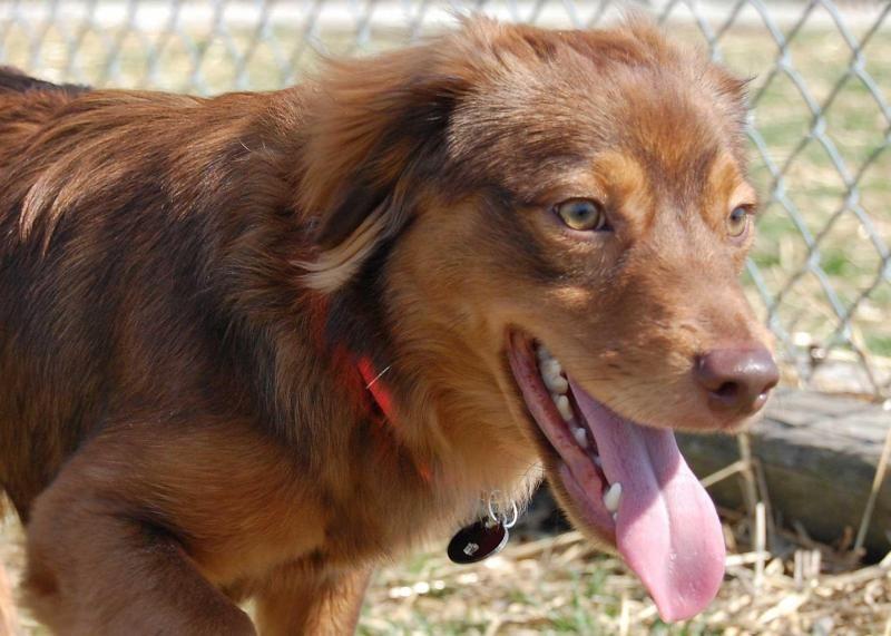 Adopt Mort on Adoptable dachshund dog, Dachshund mix, Dogs