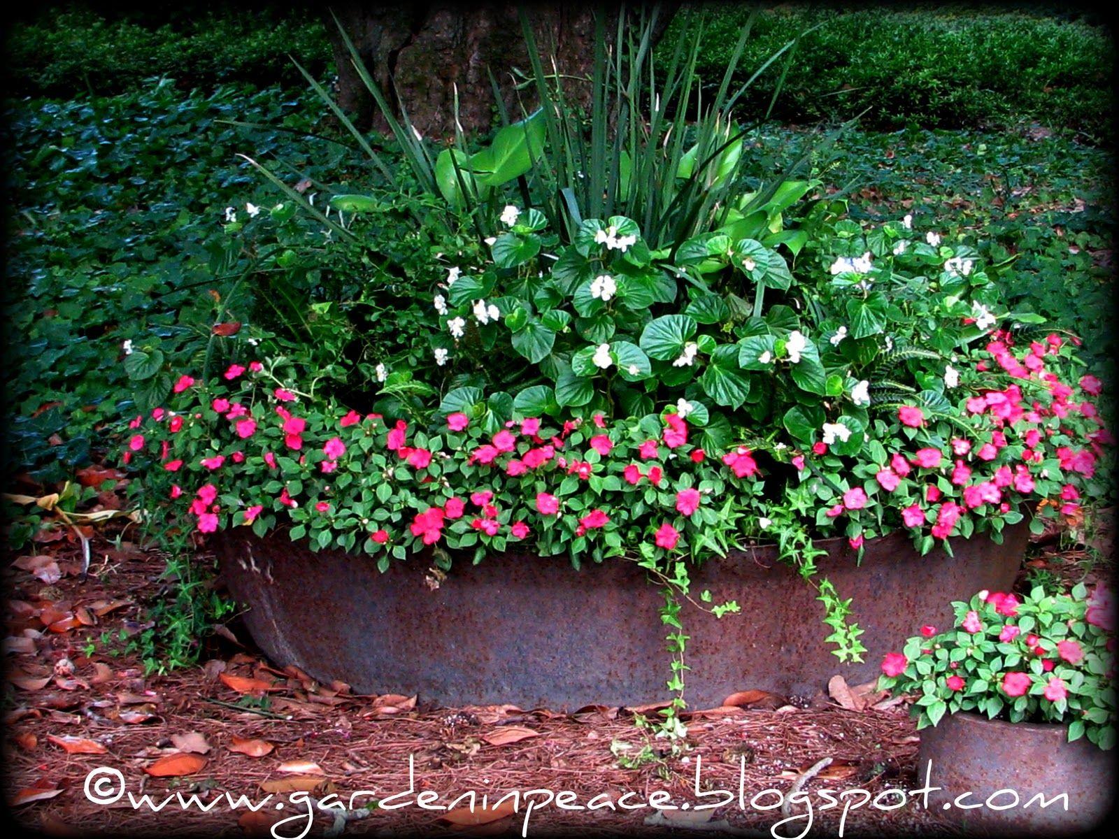 Plantings in sugar kettle. | Sugar Kettles | Pinterest | Kettle ...