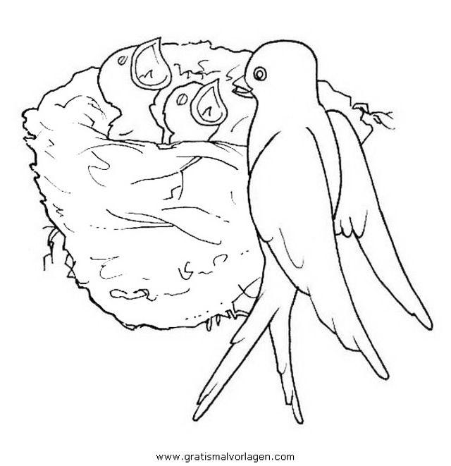 malvorlage vogel im nest  tiffanylovesbooks