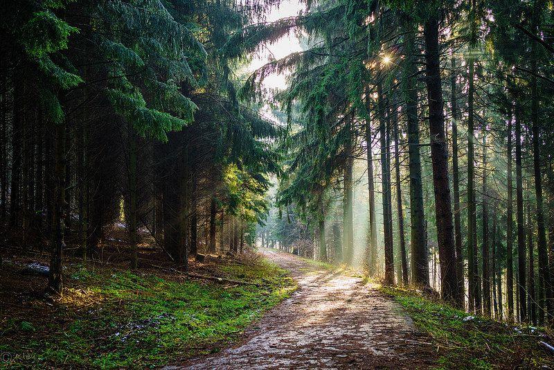 """Naturschutzgebiet """"Große Dhünntalsperre"""""""