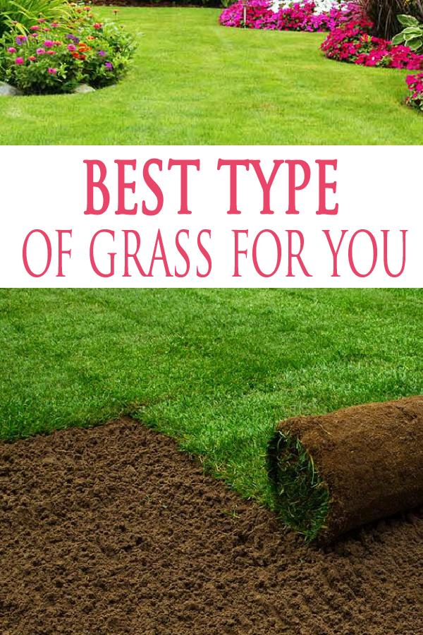 Feature Image Header Garden Lovin Types Of Grass Growing Grass Best Grass Seed