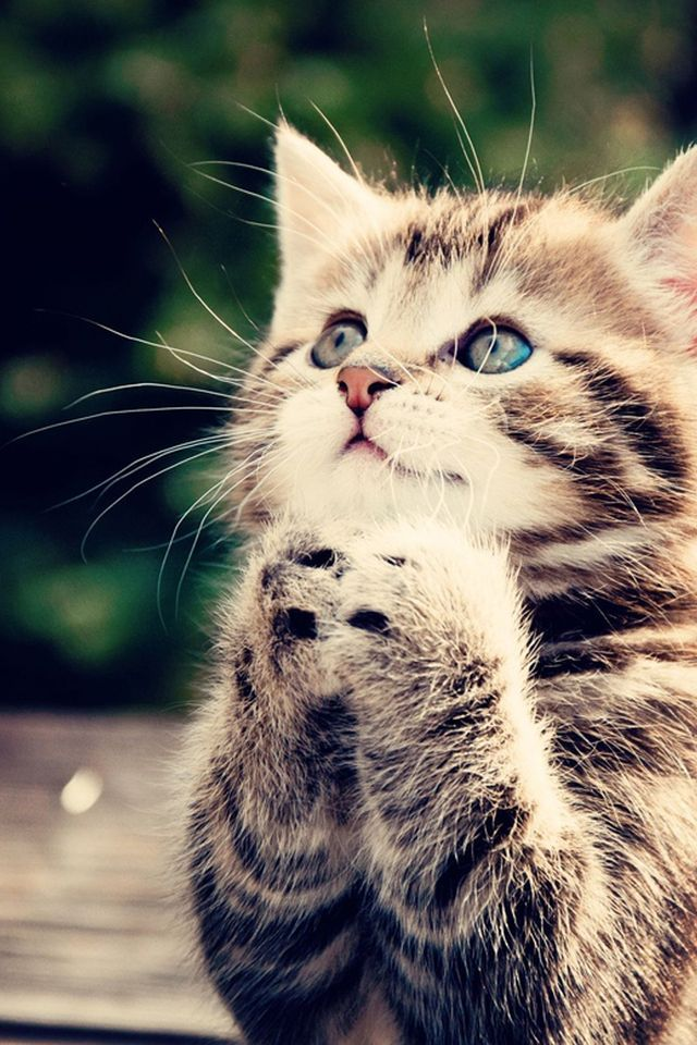 Oh please, please, please... cat, pray, beg, kitty, clasp, clap, hope, wish...kitten