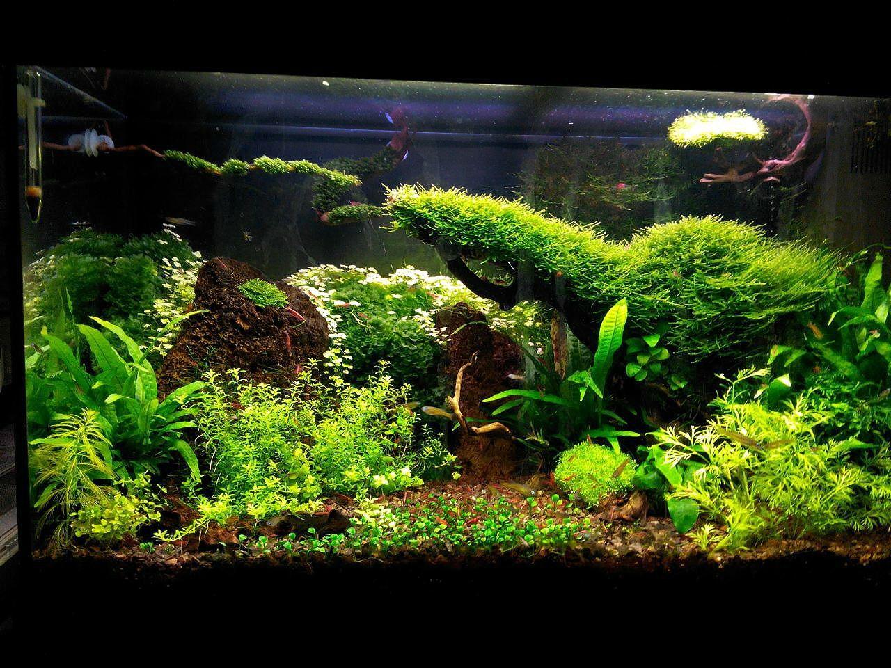 My 120lt Tank Nature Aquarium Fish Tank Aquascape