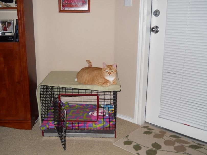Meadow my cat.  Laying on top of her cage