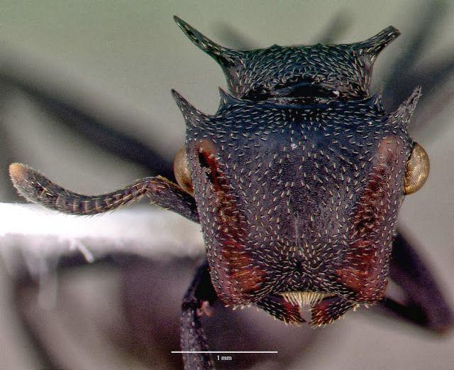 la fourmi Dark Vador - 2Tout2Rien