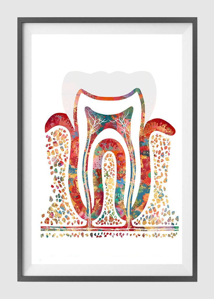 Molar Tooth watercolor print molar poster section with enamel dentin ...