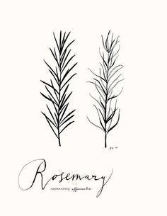 Rosemary Plant Tattoo
