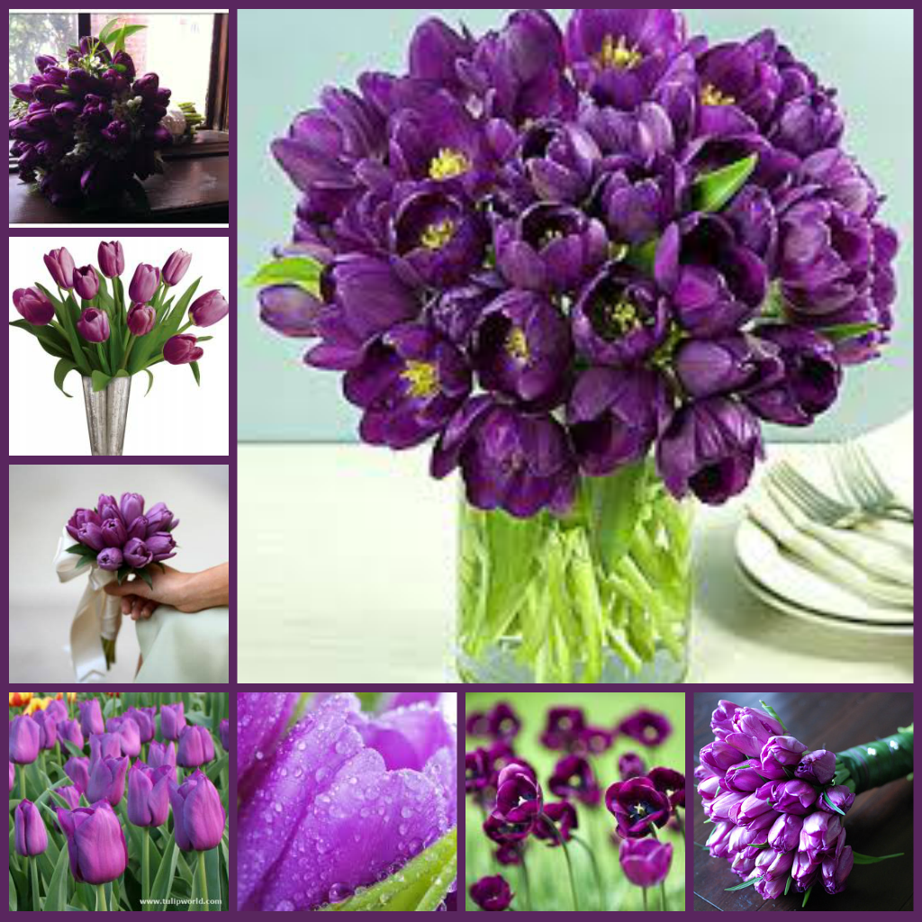 Types Of Purple Flowers Purple Flowers Types Of Purple Flowers