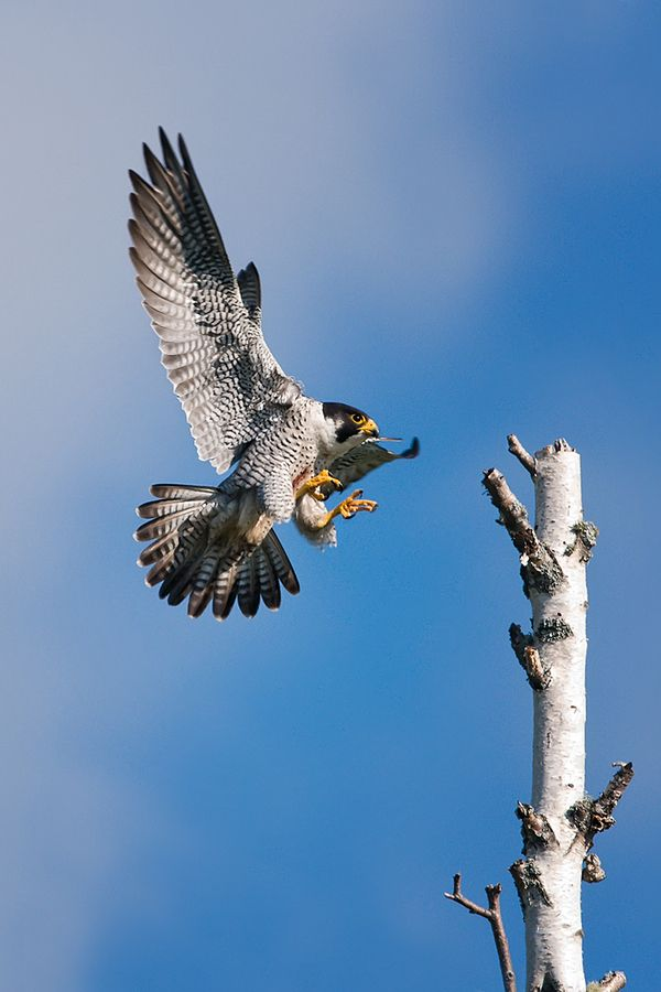 Cleared for landing by Mike  Lentz,