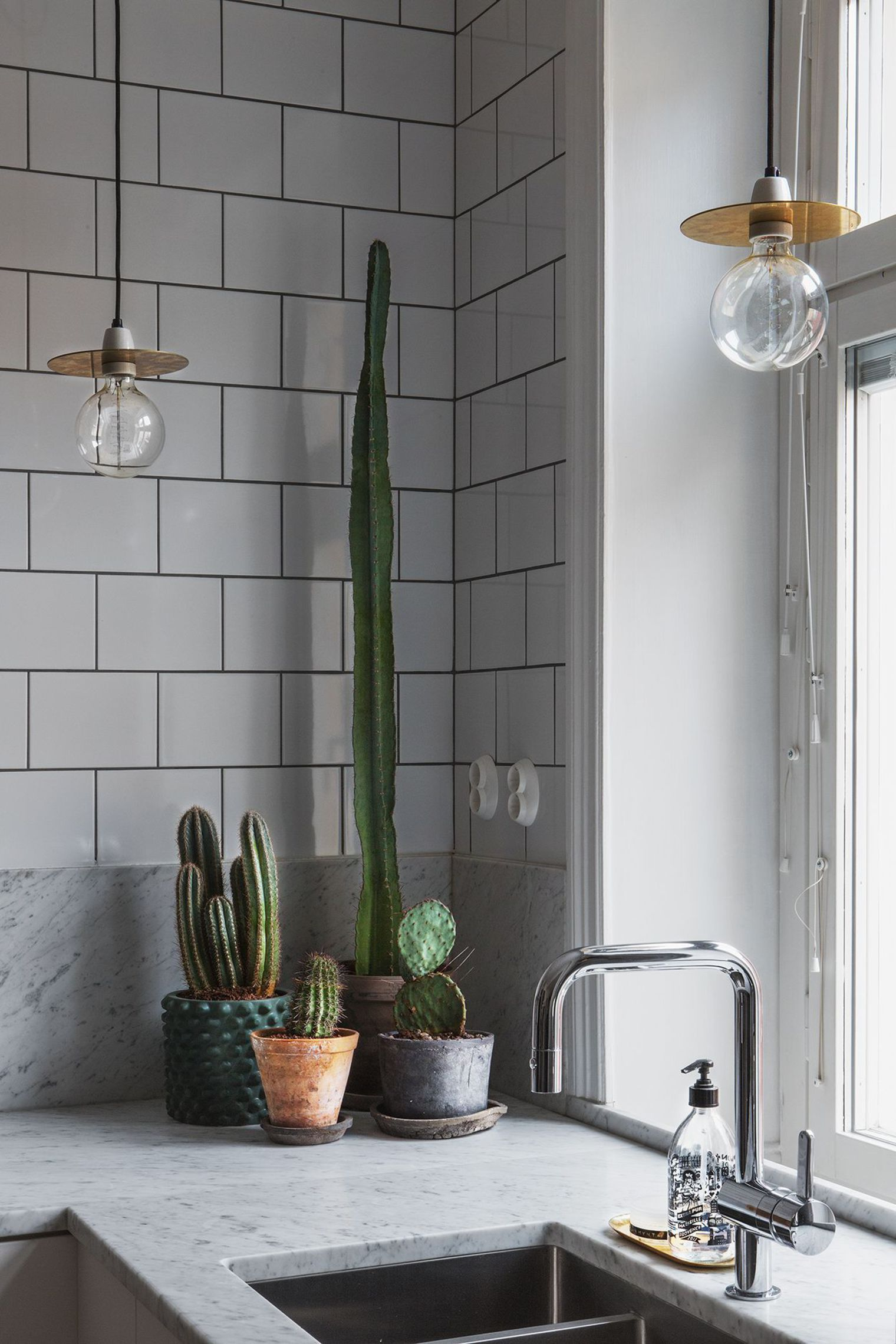 Indoor Plants A Cacti Cluster On The Kitchen Counter For