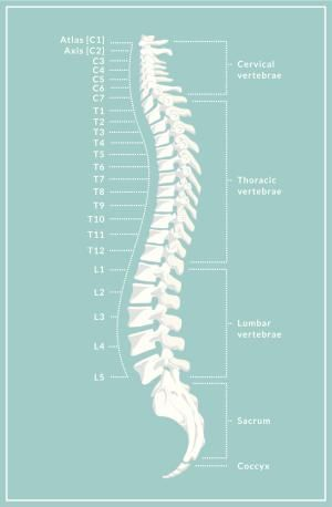 The 6 Types of Spondylolisthesis | Colours, Art centers and What is