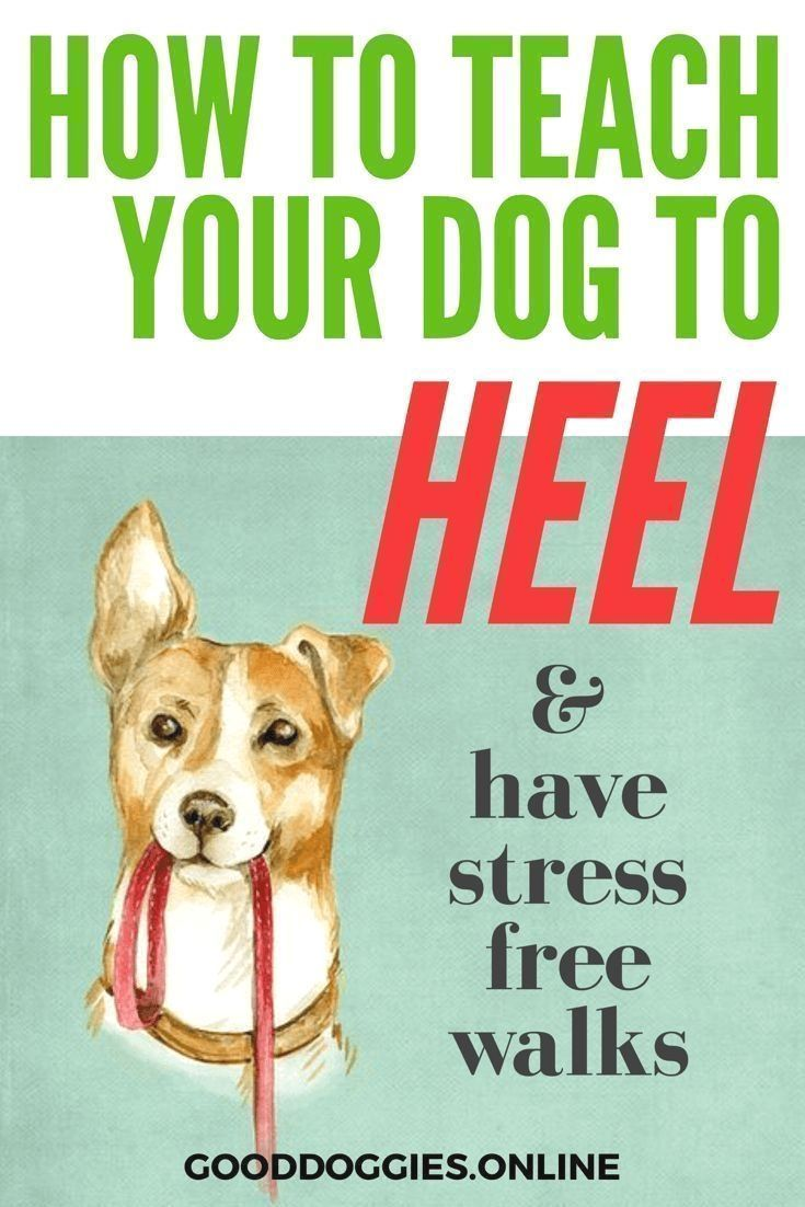 Dog training advice click the image for lots of dog