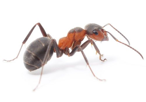 ants - Buscar con Google | ARTMI | Pinterest | Search and Ants