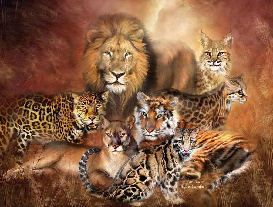 Pin By Melissa Cosette Laheye On Big Cats Big Cats Art Big Cats Cat Power