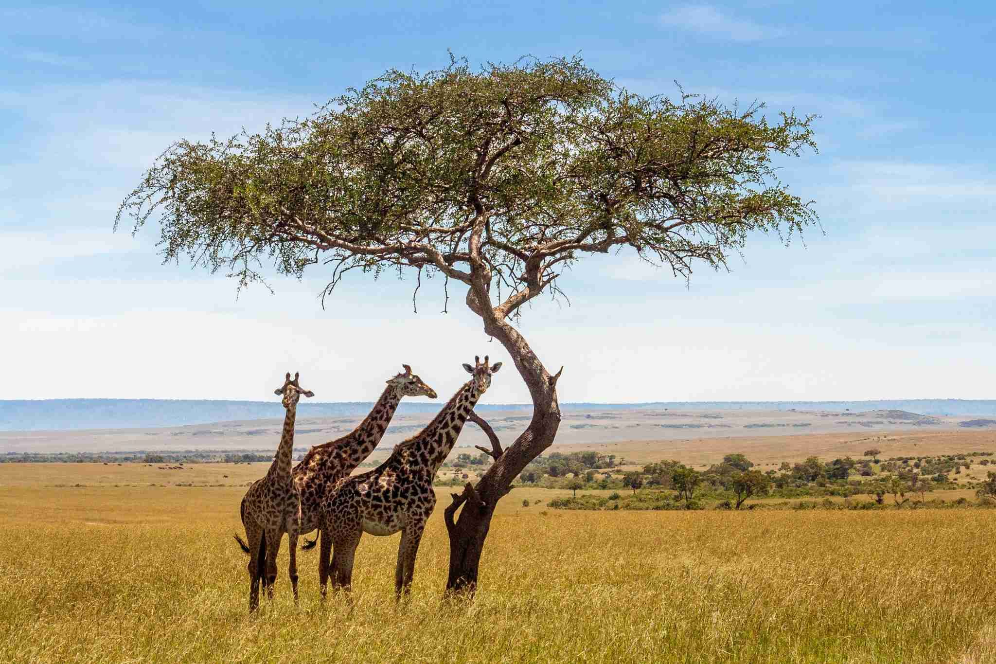How To Ensure Your African Safari Is Ethical In