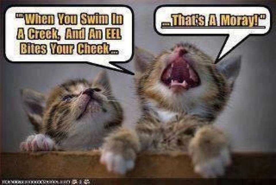 cat s amore