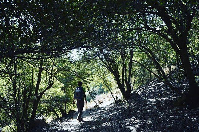 يبدأ درب الأردن في جبال عجلون الخضراء هذه غابة زوبيا راصون إلى عجلون اليوم الرابع من القسم الأول Jordan Trail Begins Instagram Instagram Posts Adventure