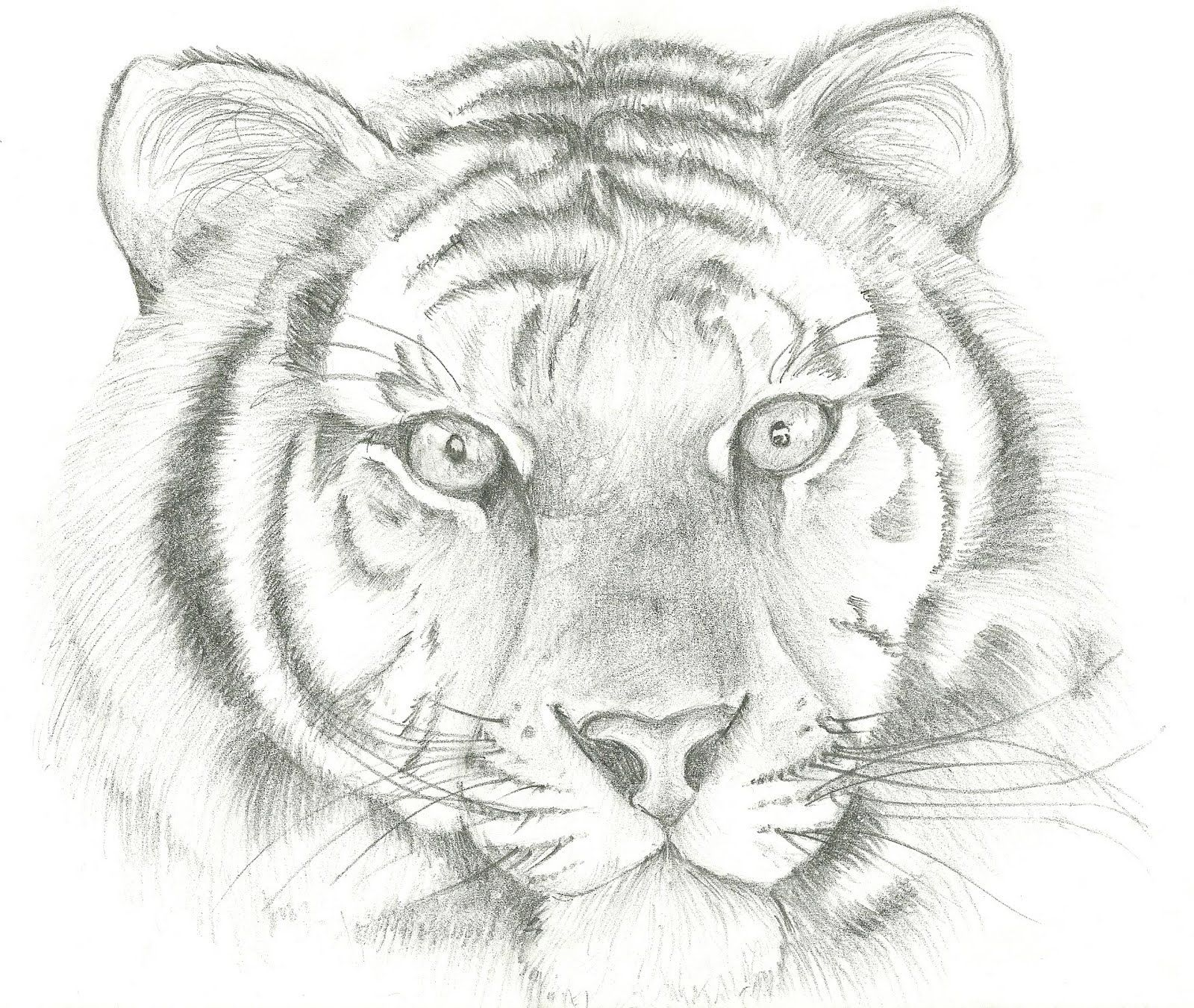 Лучшей подруге, картинки от тигра для рисования